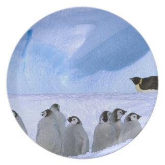 南極大陸のオーストラリアの南極領域、岬 プレート