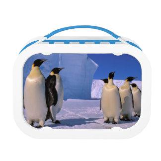 南極大陸のオーストラリアの南極領域、7 ランチボックス