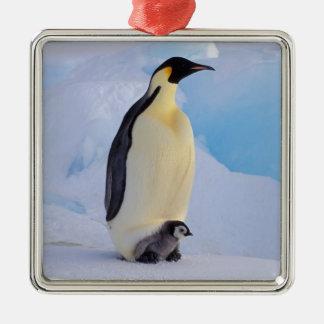 南極大陸のコウテイペンギン(コウテイペンギン属 メタルオーナメント