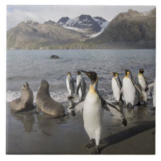 南極大陸のジョージアの南島(イギリス)、南極2 タイル
