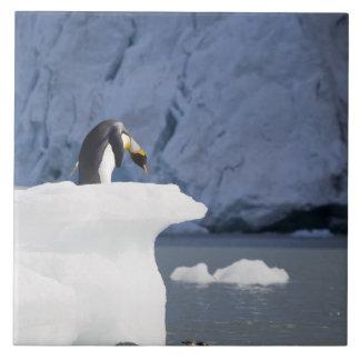 南極大陸のジョージアの南島(イギリス)、王13 タイル