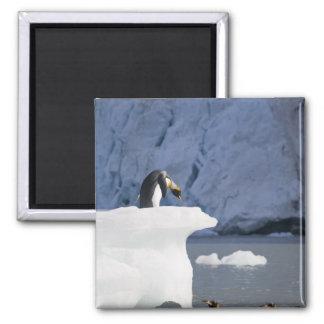 南極大陸のジョージアの南島(イギリス)、王13 マグネット