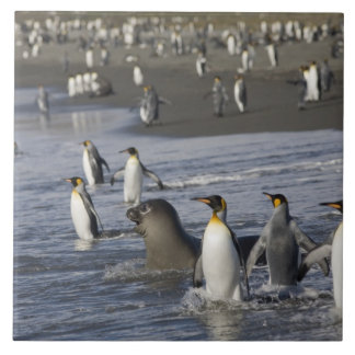 南極大陸のジョージアの南島(イギリス)、王4 タイル
