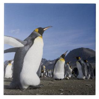 南極大陸のジョージアの南島(イギリス)、王5 タイル