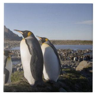南極大陸のジョージアの南島(イギリス)、王6 タイル