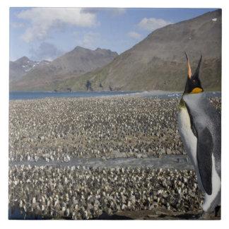 南極大陸のジョージアの南島(イギリス)、王8 タイル