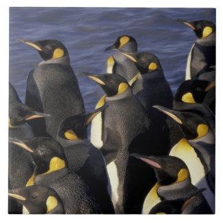 南極大陸のジョージアの南島。 キングペンギン2 タイル