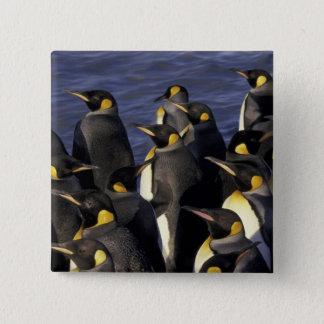 南極大陸のジョージアの南島。 キングペンギン2 5.1CM 正方形バッジ