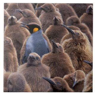 南極大陸のジョージアの南島、キングペンギン タイル