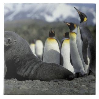 南極大陸のジョージアの南島。 南極毛皮 タイル
