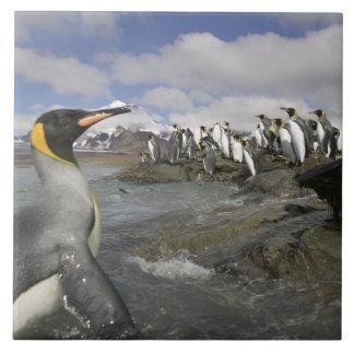 南極大陸の南極ジョージアの南島(イギリス) タイル