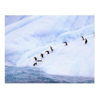 南極大陸の南極半島。 Chinstrap ポストカード