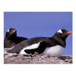 南極大陸の南極半島、Peterman ポストカード