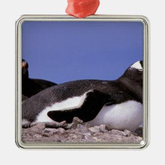 南極大陸の南極半島、Peterman メタルオーナメント