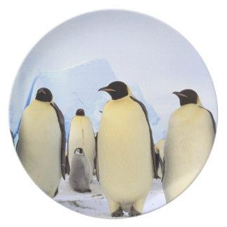 南極大陸の南極半島、Weddellの海、 プレート