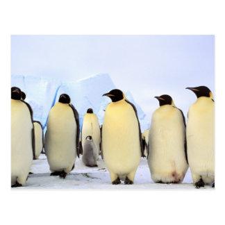 南極大陸の南極半島、Weddellの海、 ポストカード