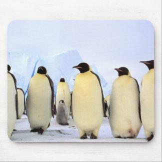 南極大陸の南極半島、Weddellの海、 マウスパッド