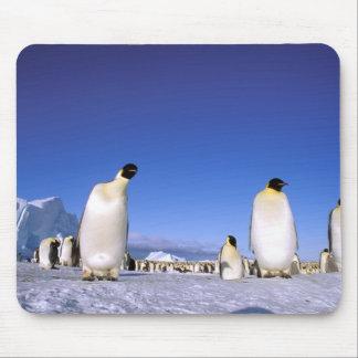 南極大陸の南極半島、Weddellの海、3 マウスパッド