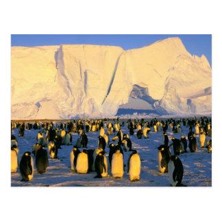 南極大陸の南極半島、Weddellの海、4 ポストカード