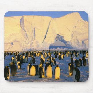 南極大陸の南極半島、Weddellの海、4 マウスパッド