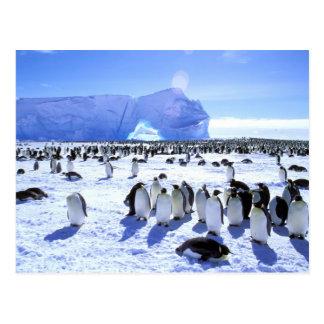 南極大陸の南極半島、Weddellの海、5 ポストカード