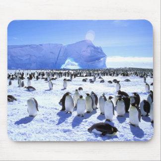 南極大陸の南極半島、Weddellの海、5 マウスパッド