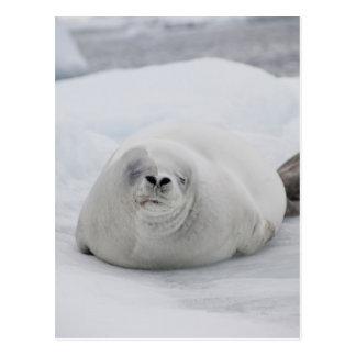 南極大陸の南極南極半島 ポストカード