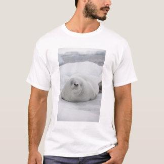 南極大陸の南極南極半島 Tシャツ