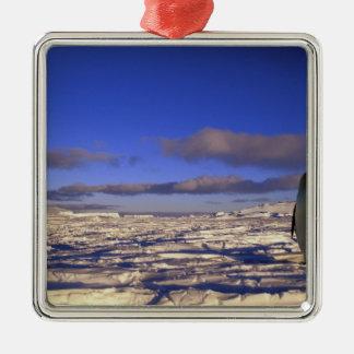 南極大陸の岬Darnley。 コウテイペンギン メタルオーナメント