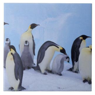 南極大陸のEmporerのペンギン((コウテイペンギン属 タイル