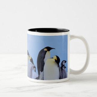 南極大陸のEmporerのペンギン((コウテイペンギン属 ツートーンマグカップ