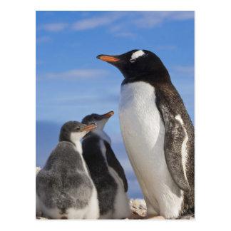 南極大陸のNekoの入江(港)。 Gentooのペンギン2 ポストカード