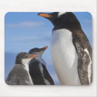 南極大陸のNekoの入江(港)。 Gentooのペンギン2 マウスパッド