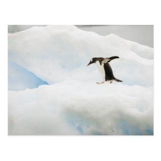 南極大陸のNeko港。 gentooのペンギン ポストカード
