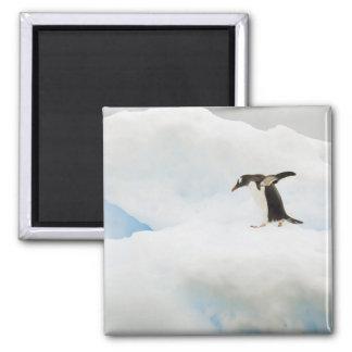 南極大陸のNeko港。 gentooのペンギン マグネット