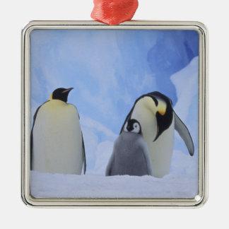 南極大陸。 コウテイペンギンおよびひよこ メタルオーナメント