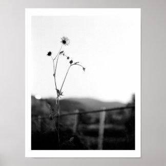 単独の花 ポスター
