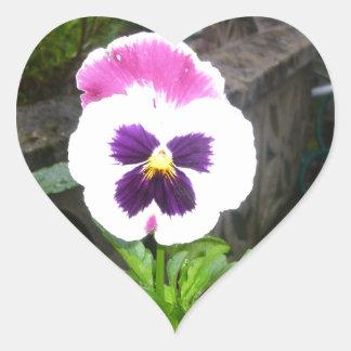 単独紫色および白いパンジー ハートシール