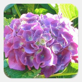 単独紫色のアジサイの花 スクエアシール