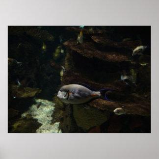 単独魚 ポスター
