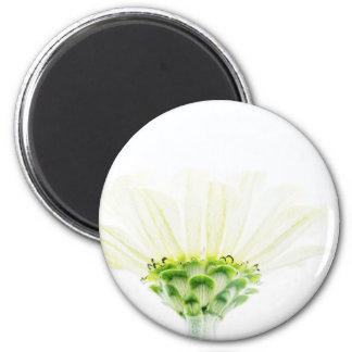 単純化した白い《植物》百日草 マグネット