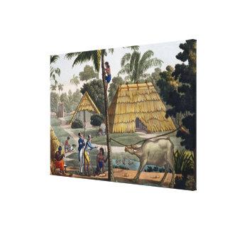 博物学者の質問先住民はKupang、ティモール、pに近づきます キャンバスプリント