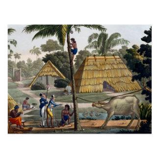 博物学者の質問先住民はKupang、ティモール、pに近づきます ポストカード