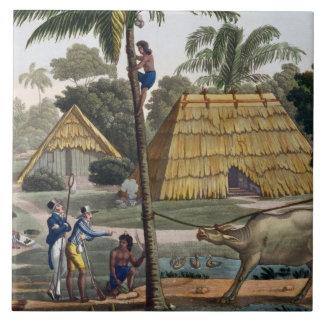 博物学者の質問先住民はKupang、ティモール、pに近づきます 正方形タイル大
