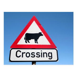 印を交差させている牛のクローズアップ。 西ケープ州 ポストカード
