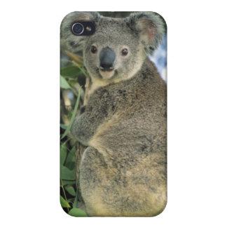 危険にさらされるコアラ、Phascolarctosのcinereus) iPhone 4/4S ケース