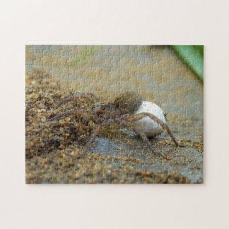 卵の嚢の写真のパズルおよびギフト用の箱を持つドクグモ ジグソーパズル