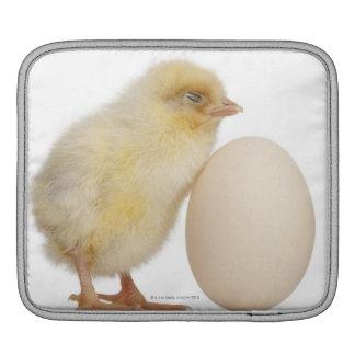卵(2日古い)を持つひよこ iPadスリーブ