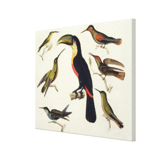 原産の鳥、Toucan (中心)を含む、Amazo キャンバスプリント