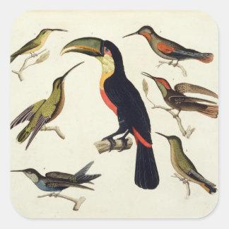 原産の鳥、Toucan (中心)を含む、Amazo スクエアシール